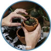 Λάδι καρύδας- ξηρά χέρια