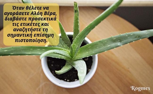 Αλόη βέρα - καλλιέργεια
