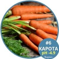 Αλκαλικές τροφές - Καρότα