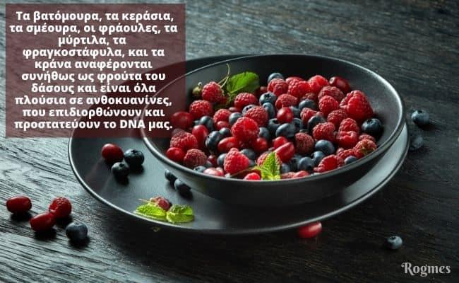 φρούτα του δάσους και πρόληψη του καρκίνου