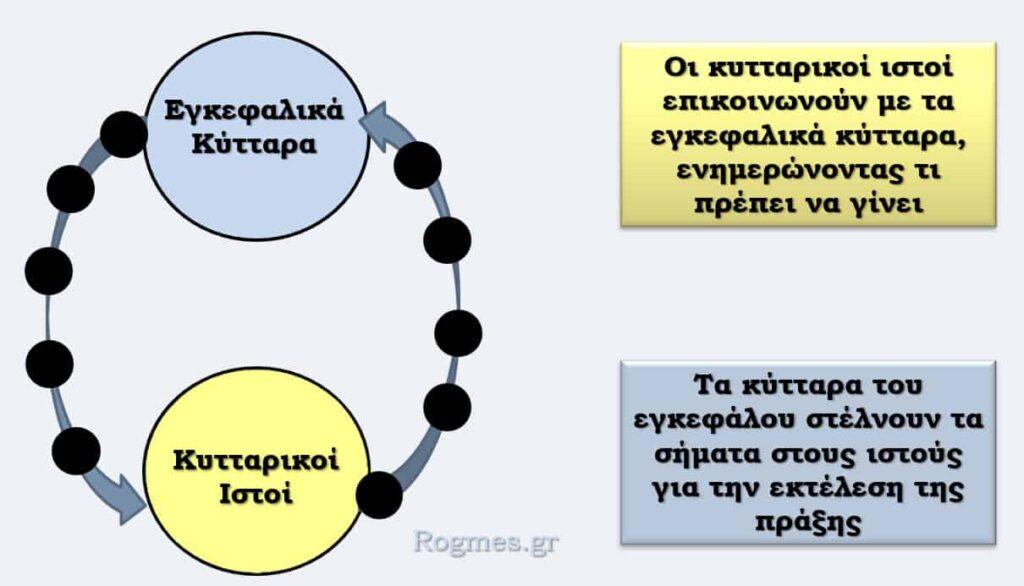 Λειτουργία του νευρικού συστήματος
